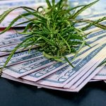 The Economics of Legalization